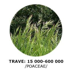 5-trave